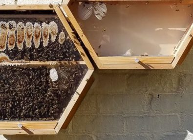 Beekeeping for Biodiversity and Income Generation