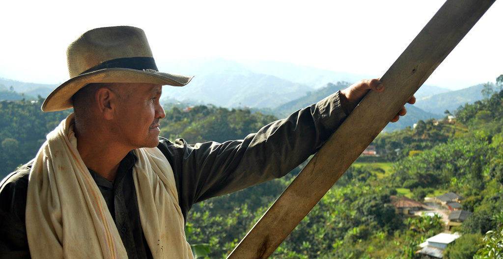 Man overlooking coffee fields