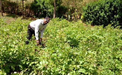 Biogas alleviates health problems