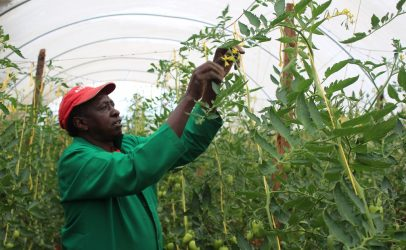 Securing an economic future through horticultural farming – and training.