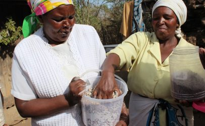 Ensuring farmer's access to open source seeds systems in Kenya