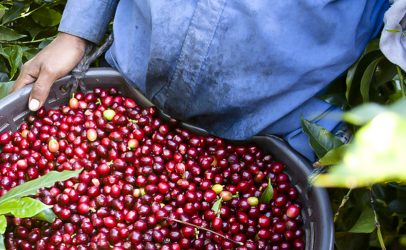 Hivos expands SAFE coffee program to Mexico