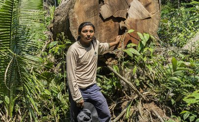 New evidence shows willful destruction of the Brazilian Amazon