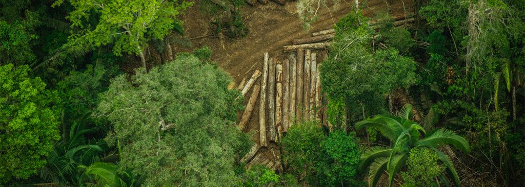 Deforestation Amazone Brazil