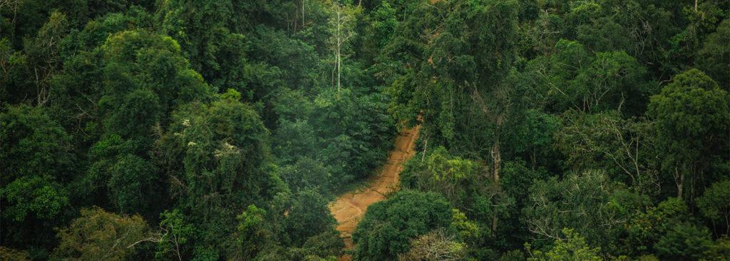 Deforestation Amazon Brazil