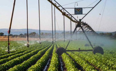 Radical changes to the global food system needed to halt environmental destruction and prevent ecosystem collapse