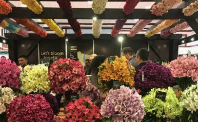 CSR Africa portal blooms at the Kenyan flower fair