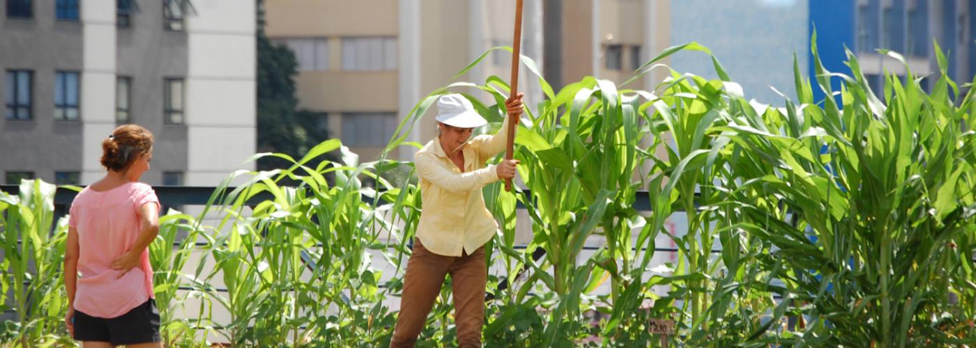 RUAF promotes urban food security