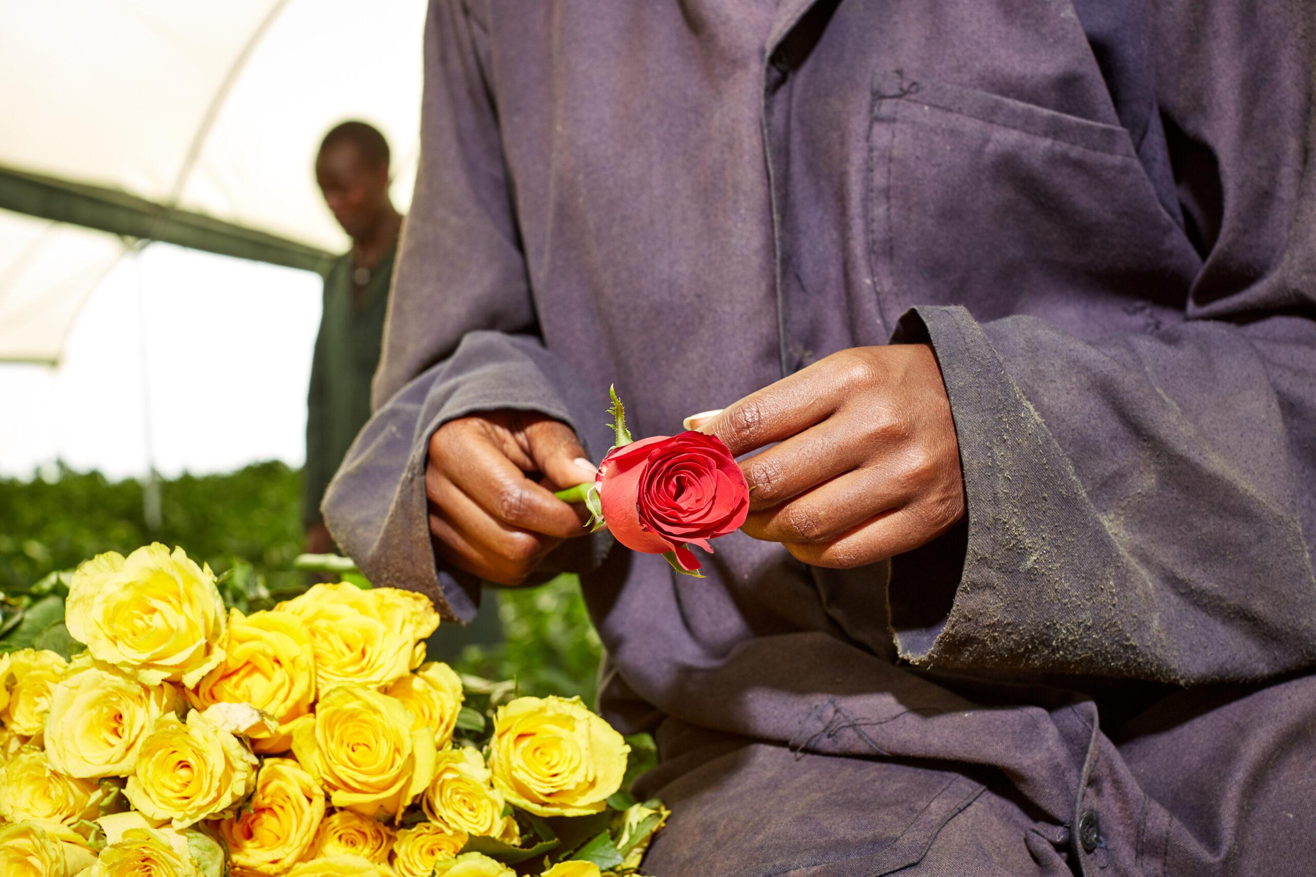 Tambuzi Labor Day