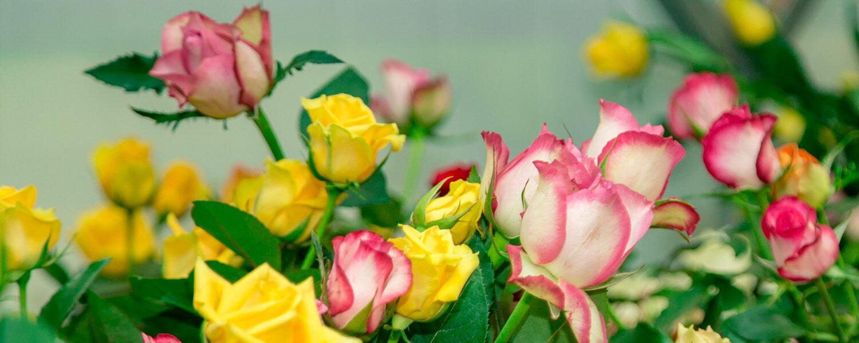 Rwanda flower farm