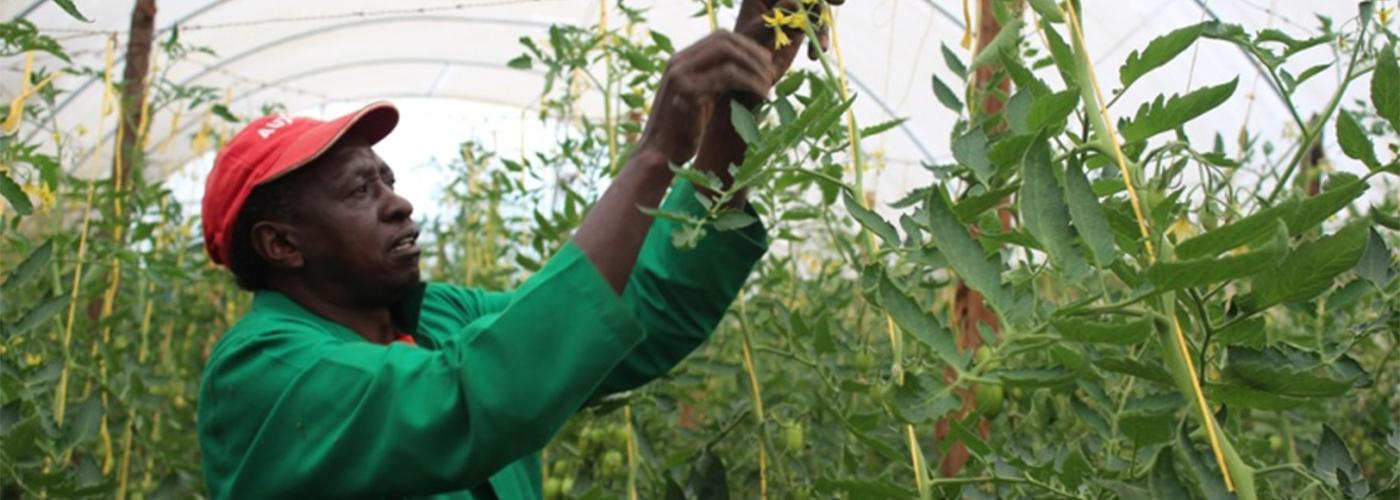 Kenya Market-led Horticulture Project (HortIMPACT)