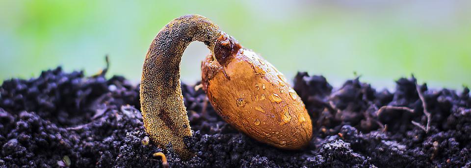 Hivos announces Disrupt Seeds Ideathon