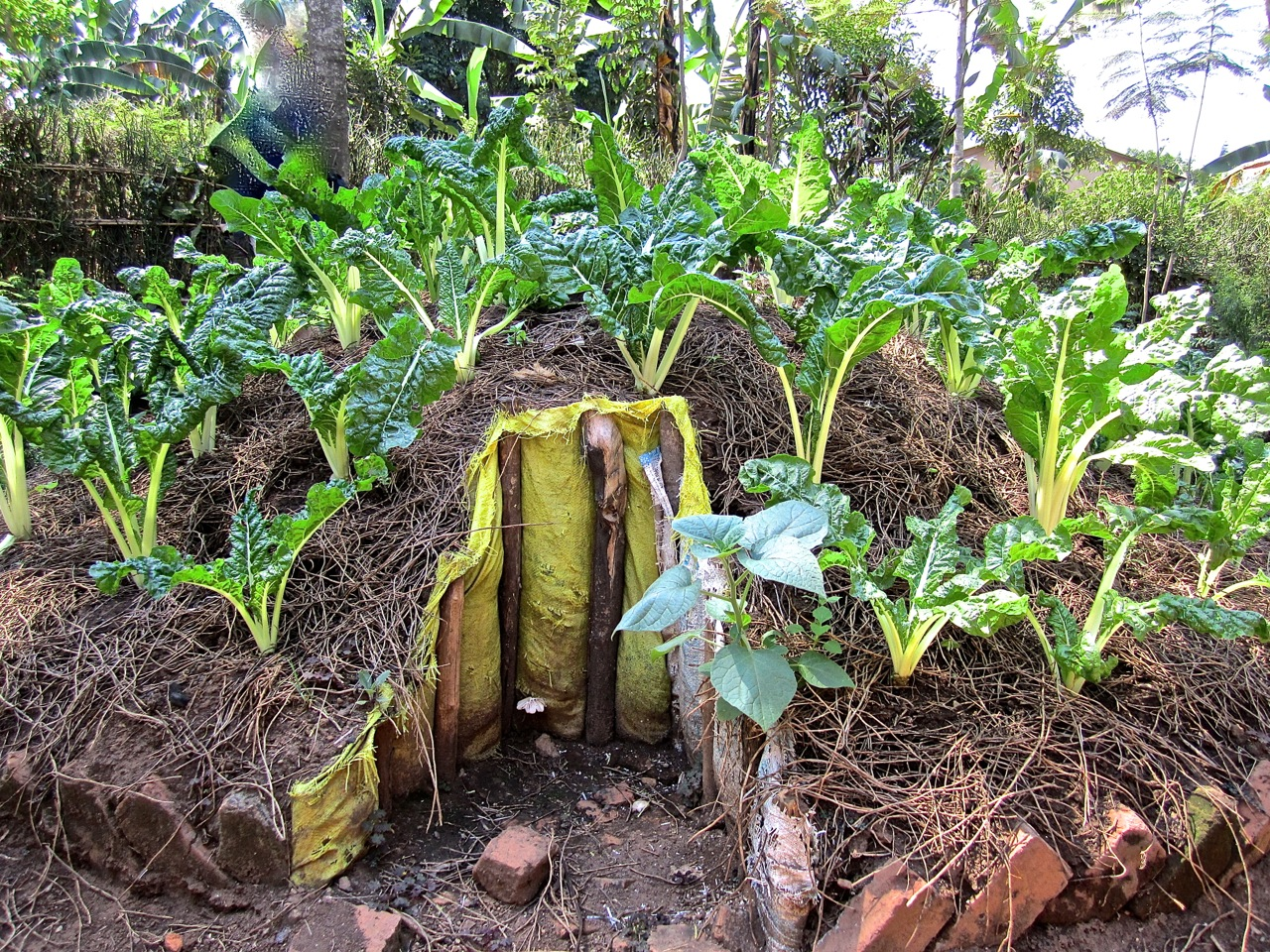 Nutritional gardens to improve diets at and beyond schools