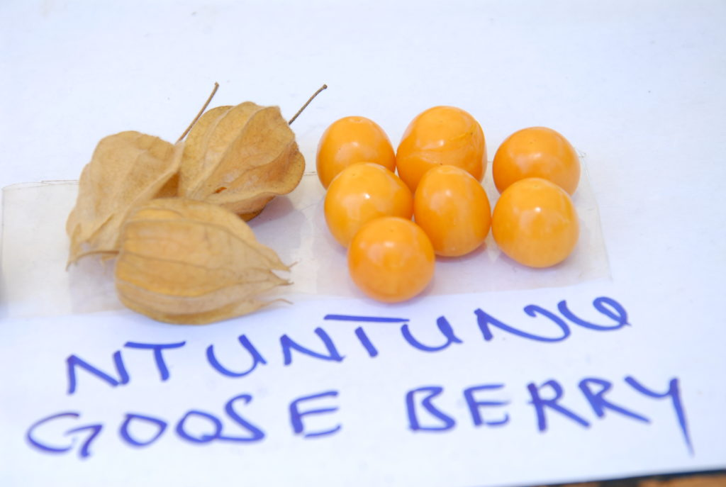 Rediscovering value of indigenous fruits Uganda - Sustainable Diets