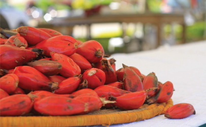 Protecting indigenous foods, preserving biodiversity – the solutions are in nature