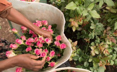 How Tanzanian flower farms ensured workers were protected during COVID-19