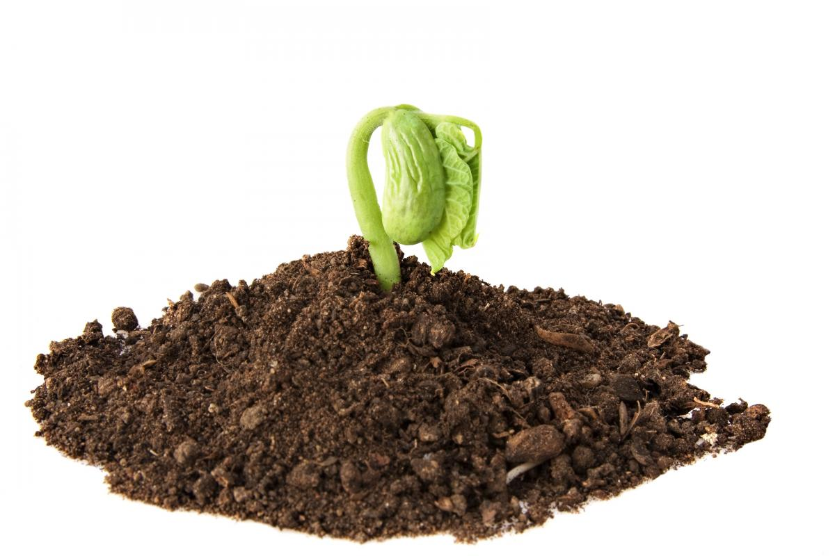Seeds Are the Soul of Agriculture
